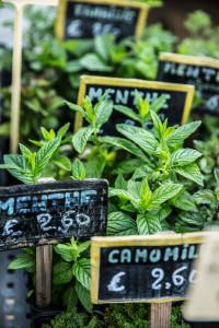 Marché montbrison herbes aromatique (1 sur 1)