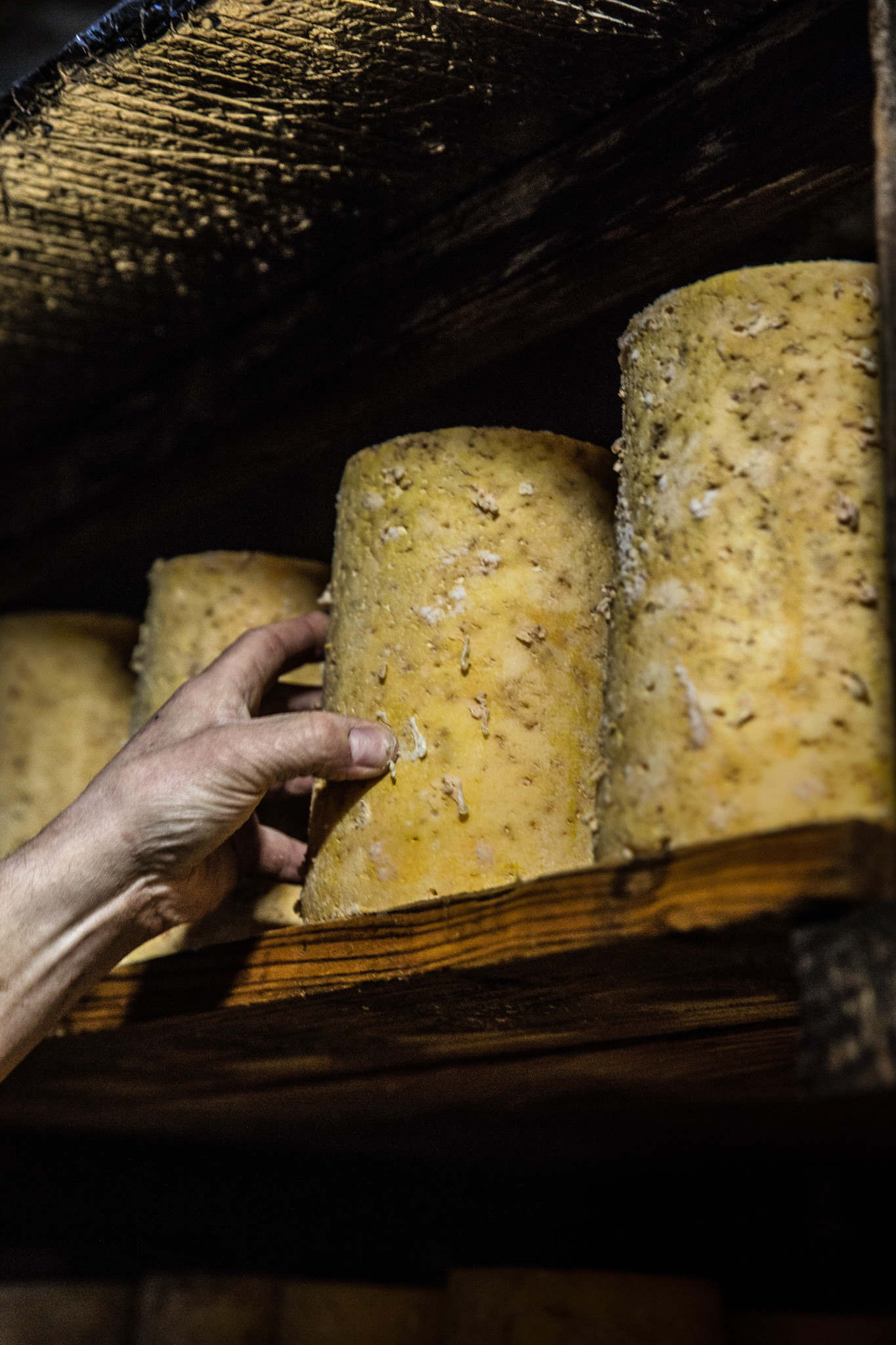 affinage fourme montbrison fromagerie hautes chaumes
