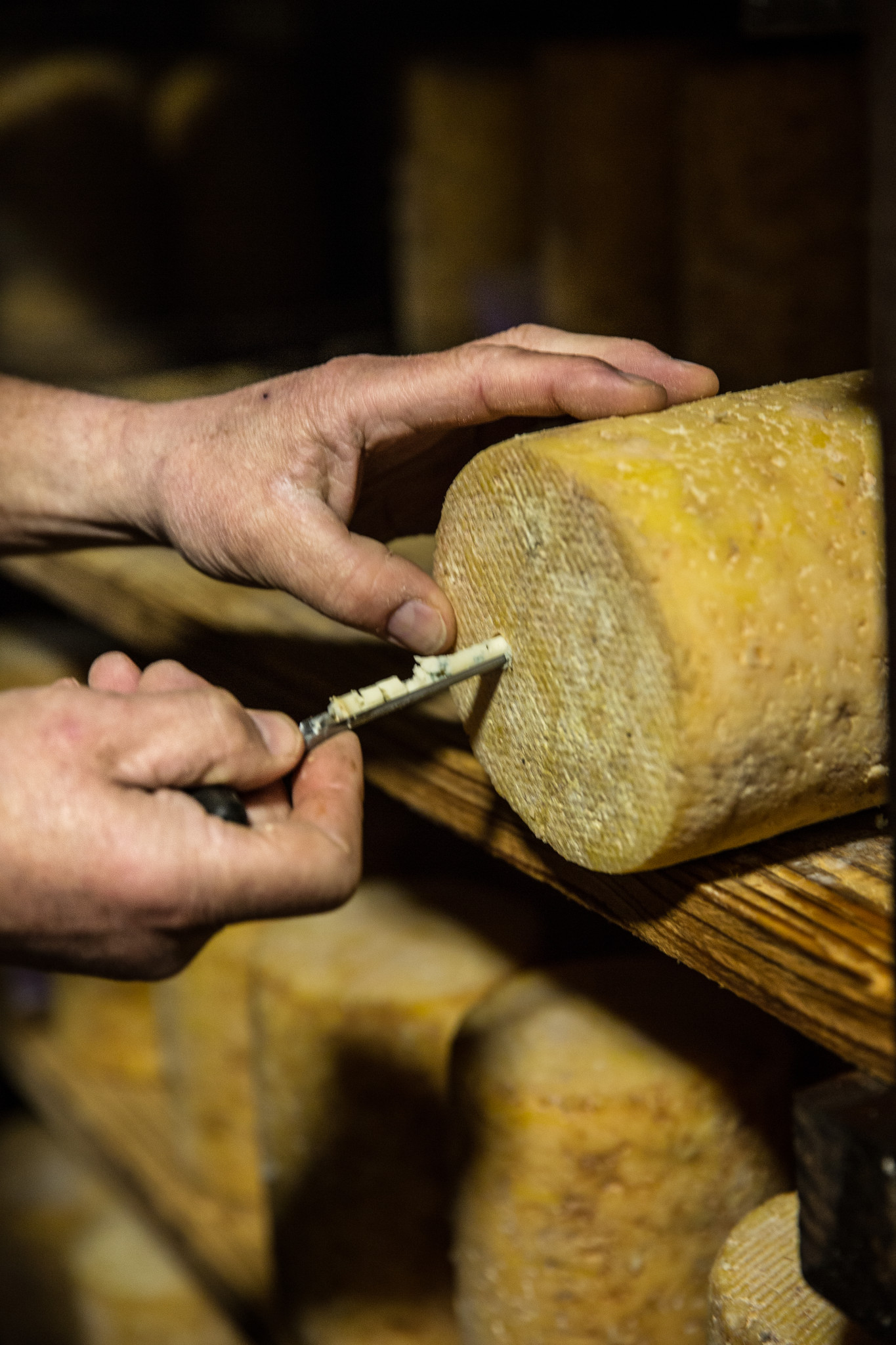 carottage fourme montbrison fromagerie hautes chaumes. V2