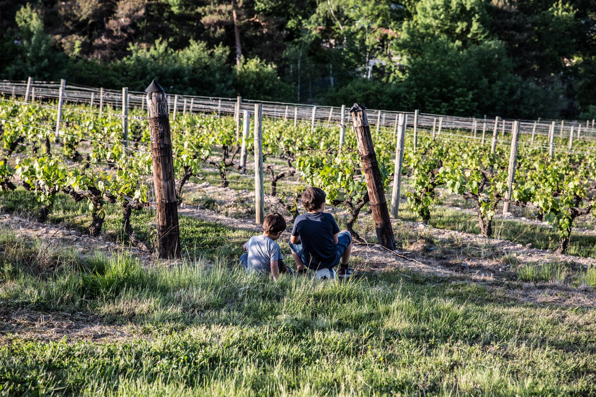 enfants vignes (1 sur 1)