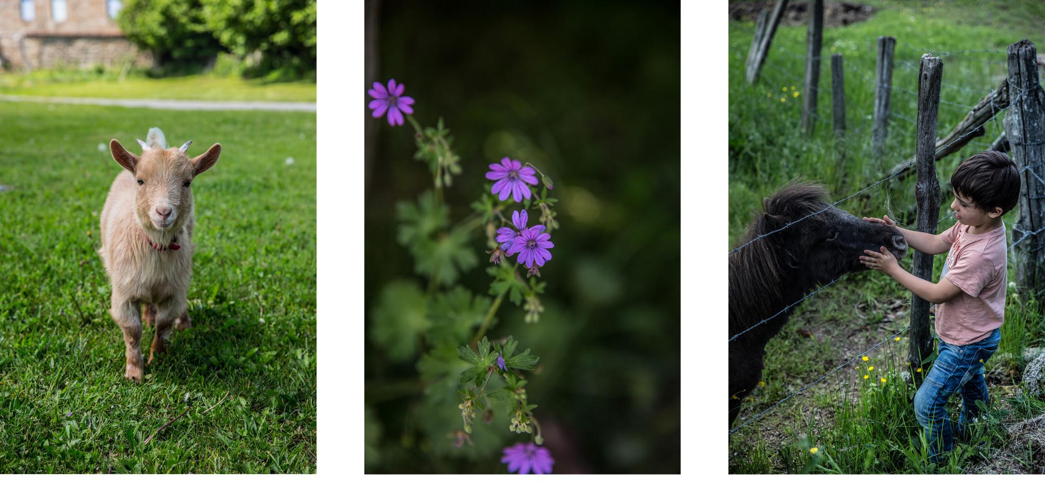 Les rutardises florales rutard