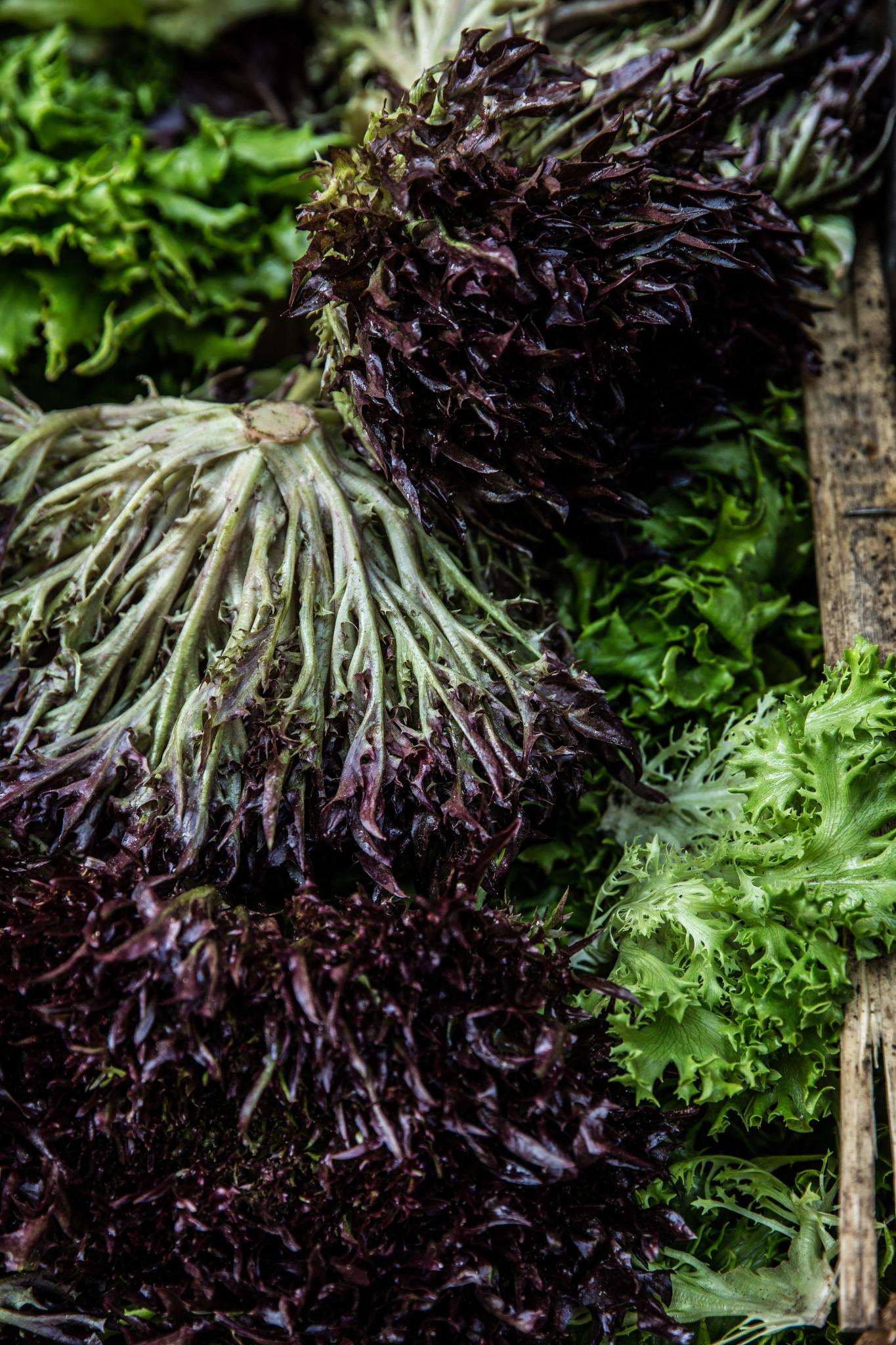 Marché montbrison salade frisée (1 sur 1)