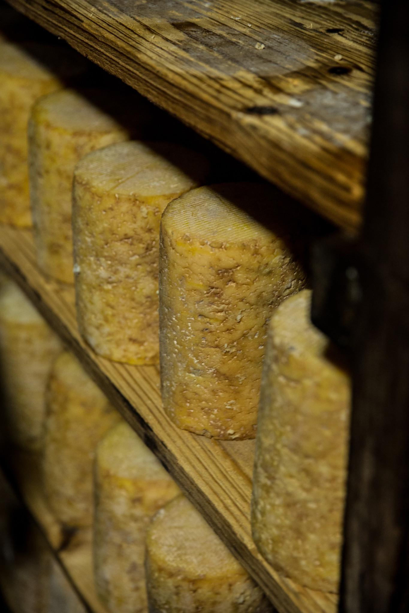 fourme montbrison empilée fromagerie hautes chaumes