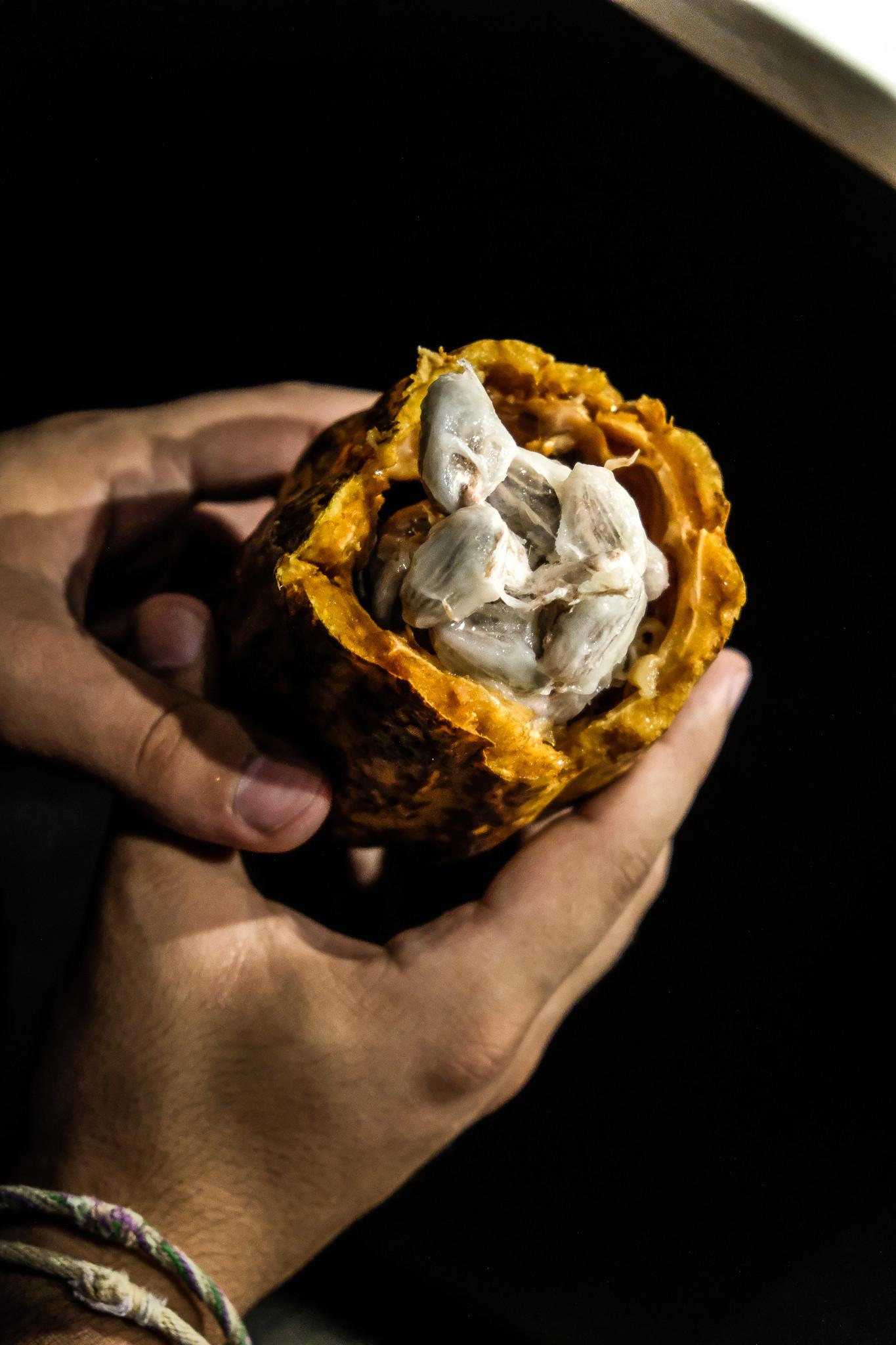 cite chocolat valrhona feve cacao (1 sur 1)